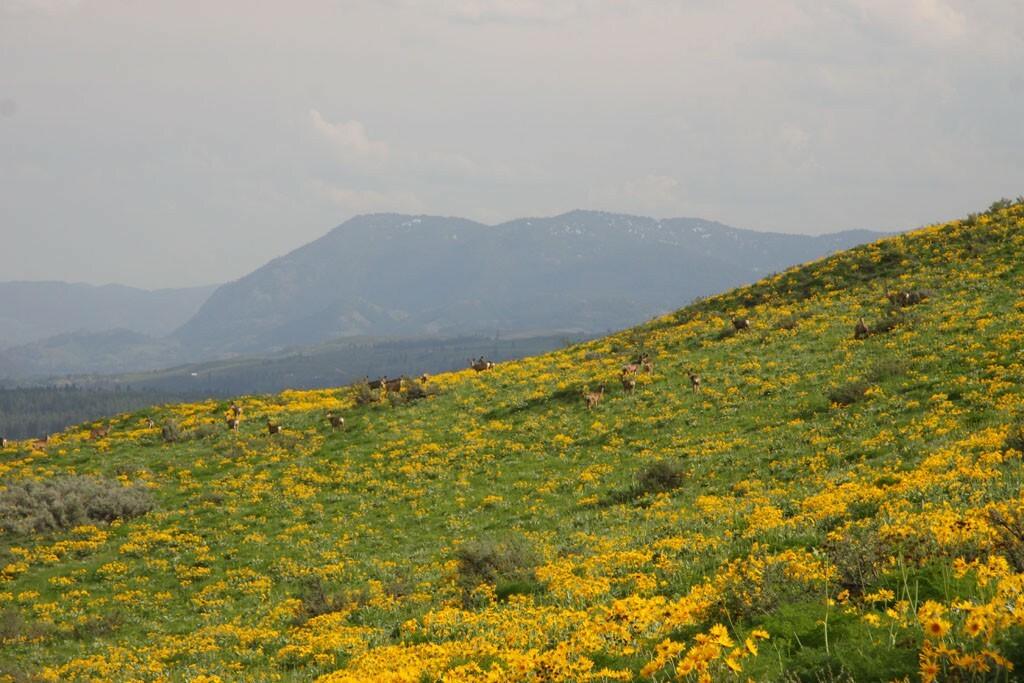 54 Mule Deer Trail, Winthrop, WA - USA (photo 3)