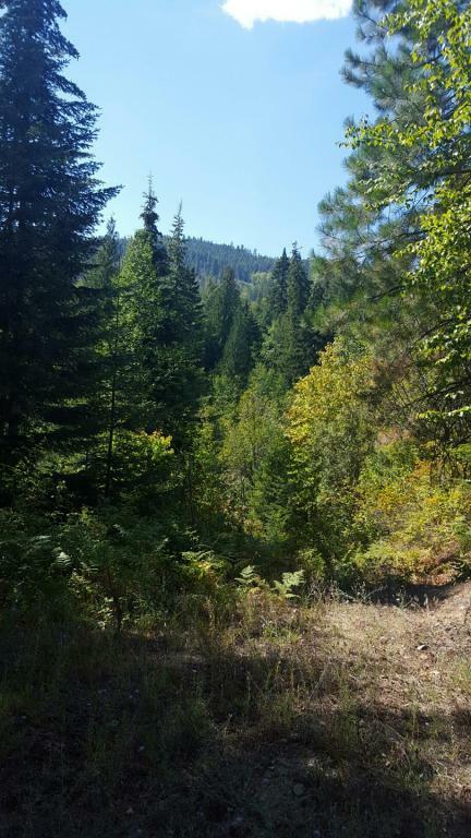 Nna Pine Leaf Rd, Priest River, ID - USA (photo 1)
