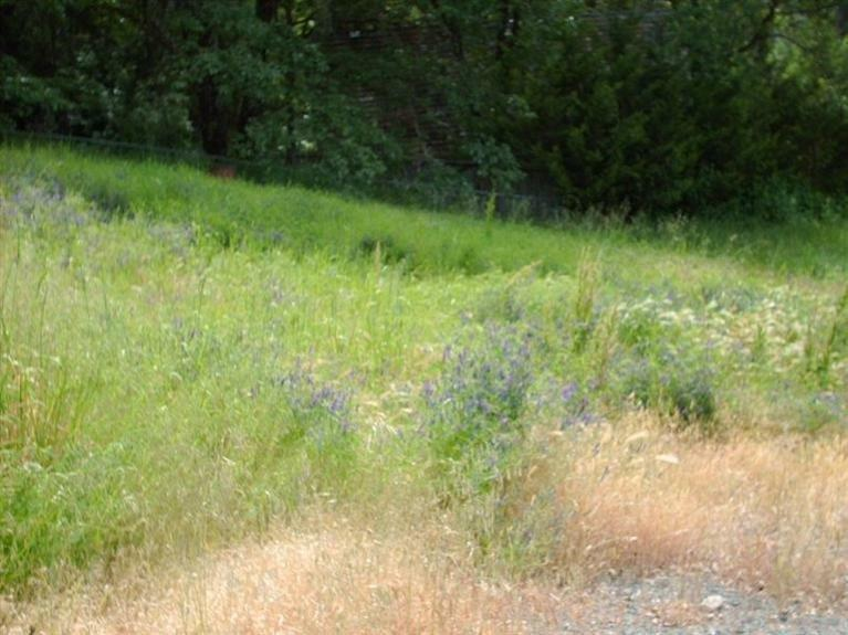 105 Sunnybrooke Court, Rogue River, OR - USA (photo 2)