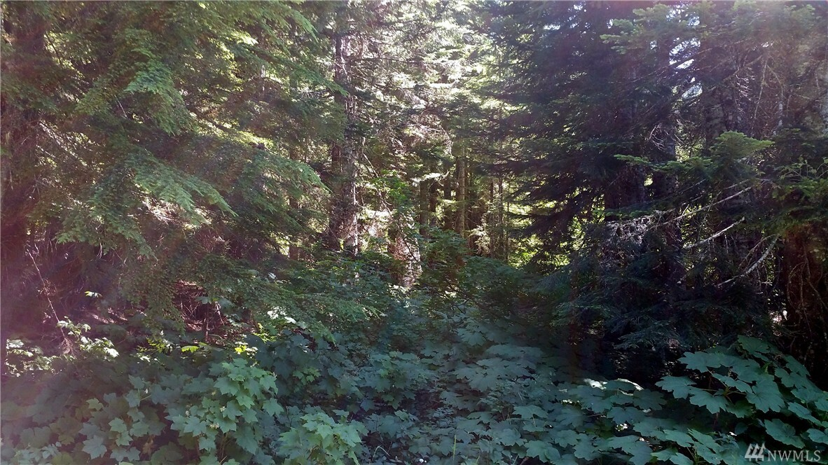 0 Huckleberry Peak Rd, Snoqualmie Pass, WA - USA (photo 4)